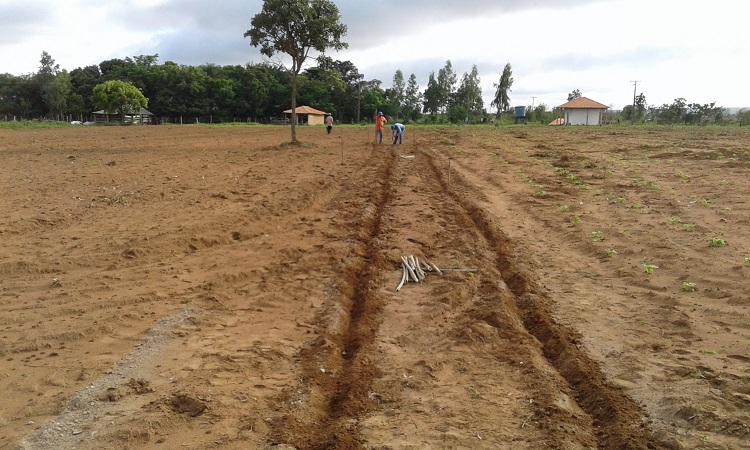 Sem agrotóxicos: conheça a Ceiba e sua produção agroecológica